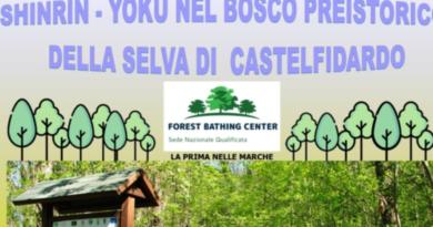 Video Immersione alla Selva di CastelFidardo
